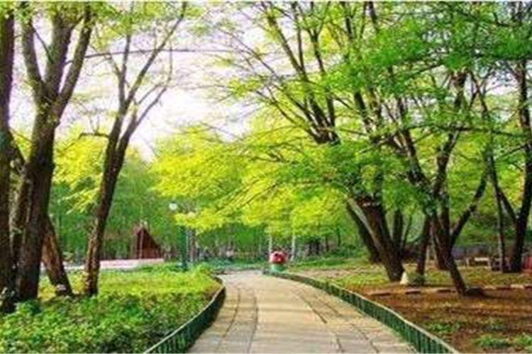 Heilongjiang Forest Botanical Garden4