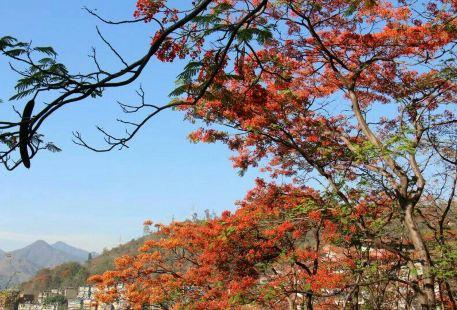 Panzhihua Subtropical Plant Specimen Garden