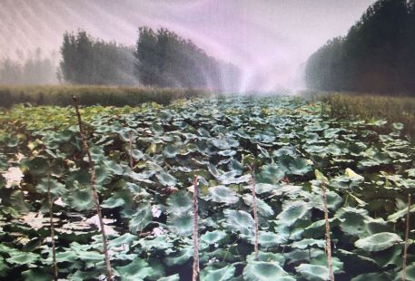 Maying Wetland