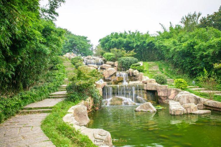 南灣湖茶島