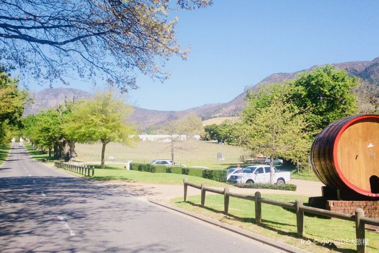 Groot Constantia Wine Estate2