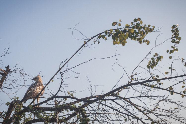 烏達瓦勒韋國家公園3