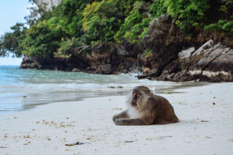 猴子海灘4