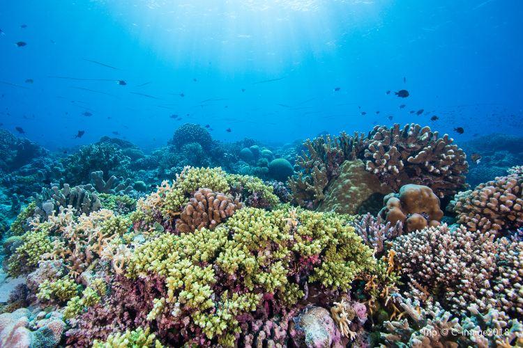 Tubbataha Reef National Park2