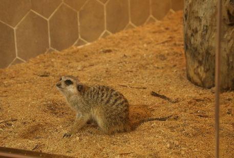 MyZoo麥族室內動物觀賞樂園