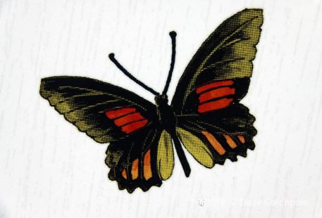 Butterfly Art Gallery