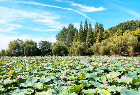 Jun Shan Tuanhu Hehua Park