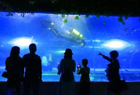 Mianyang Sea World