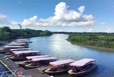 Dongzhaigang mangroves