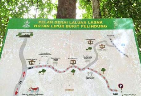 Bukit Pelindung Recreational Forest
