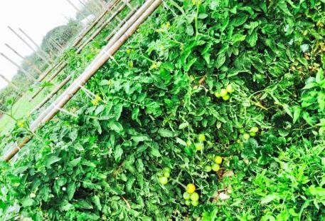 Wanshengwei Strawberry farm