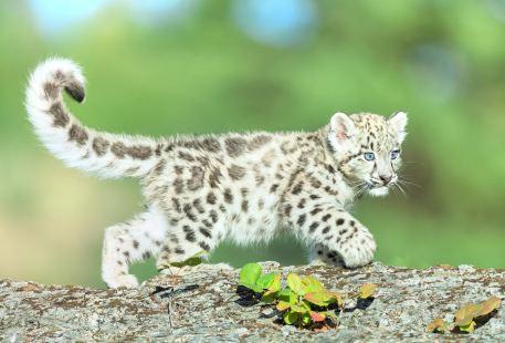 칭다오 야생동물원