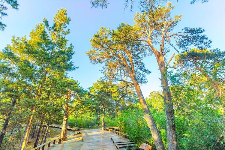 海拉爾國家森林公園1