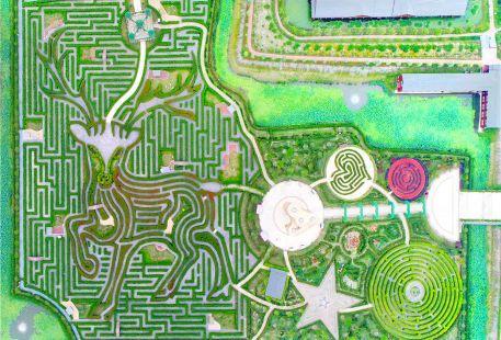 Dream Labyrinth