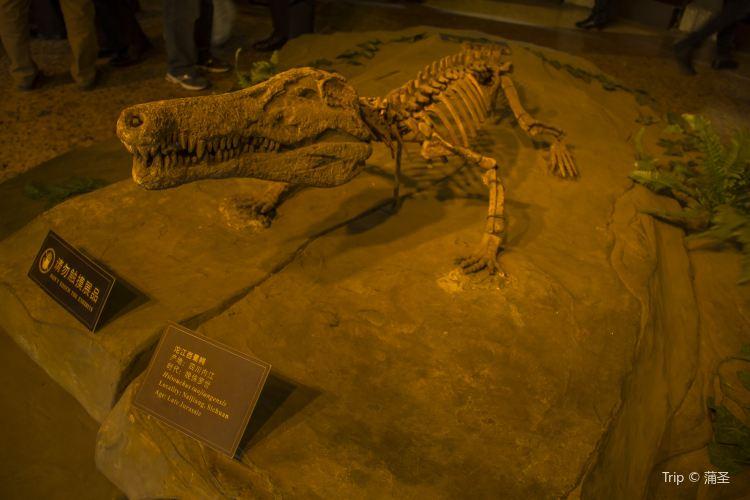 쯔궁 공룡 박물관4