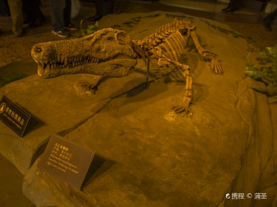 쯔궁 공룡 박물관