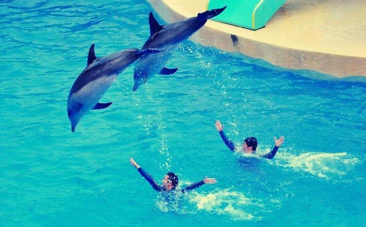 Hefei Ocean World