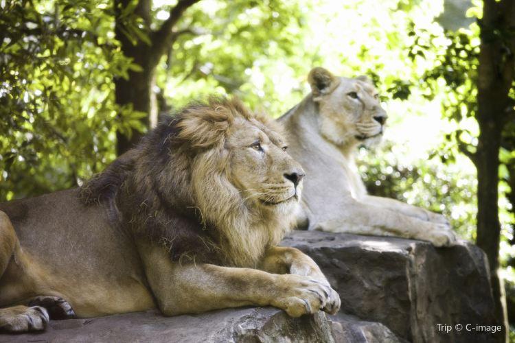 우에노 동물원1
