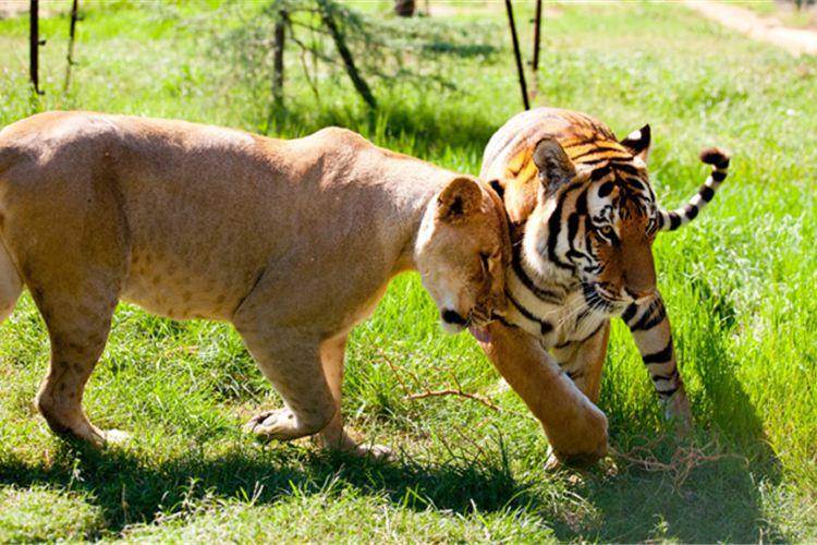정저우 동물원1