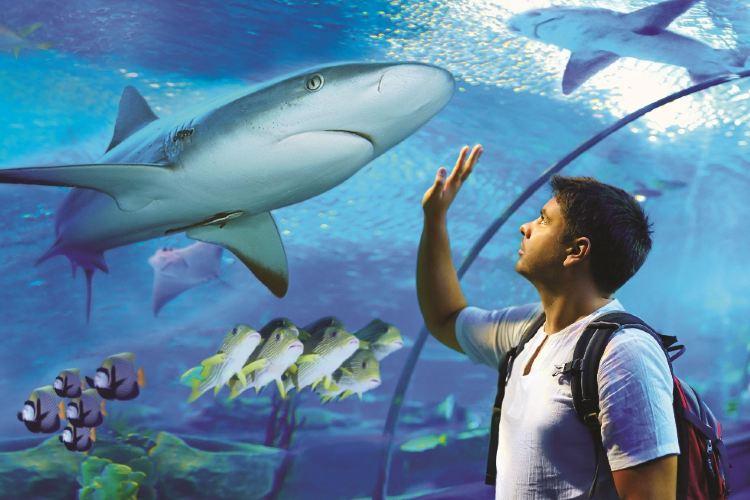 凱恩斯水族館2