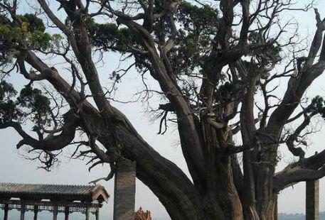 秦柏旅遊生態園區