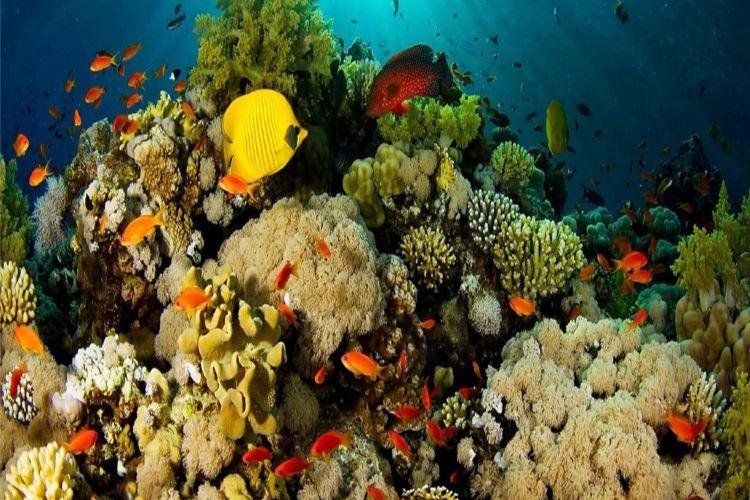 永泰歐樂堡海洋世界4