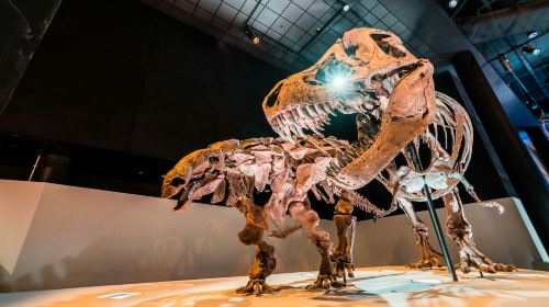 The Houston Museum of Natural Science