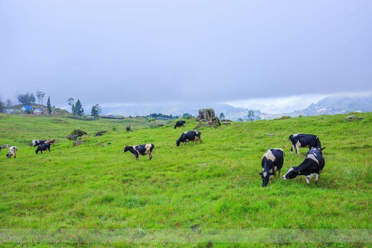 Desa奶牛農場3