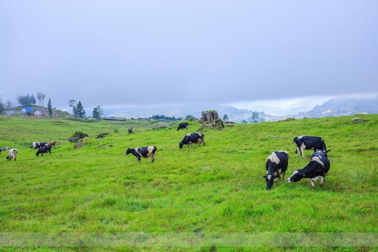 Desa Cattle Dairy Farm3