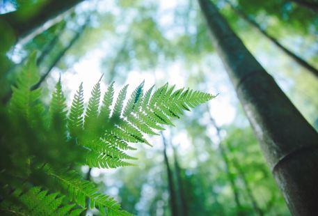 桫欏國家級自然保護區
