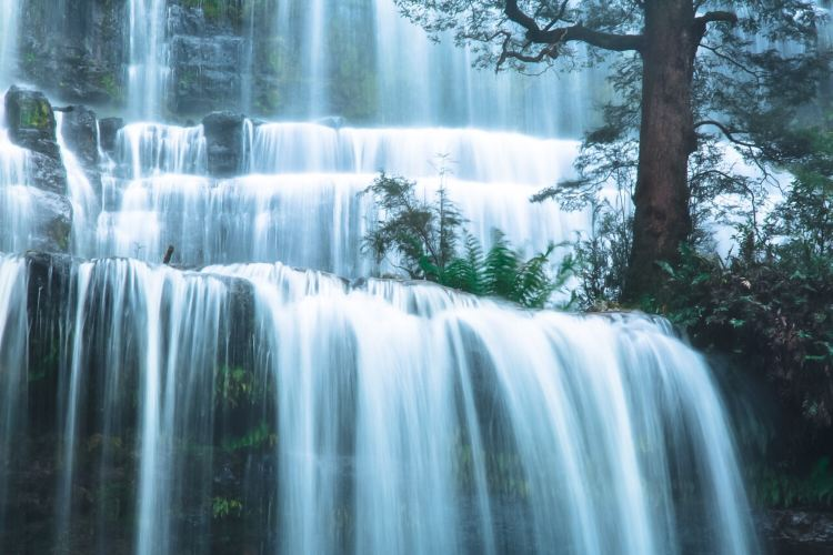 Mount Field National Park4