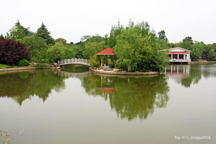 Hefei Arboretum1