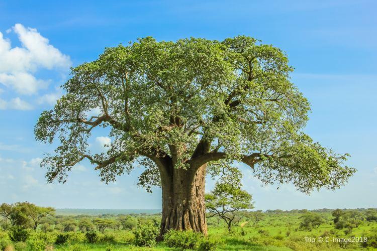 Tarangire National Park3