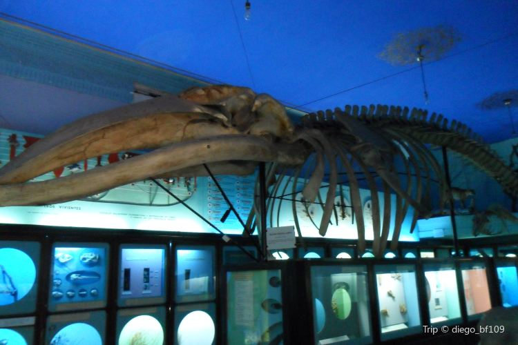 Museo Oceanográfico1