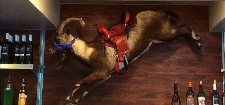 Rodeo Goat2