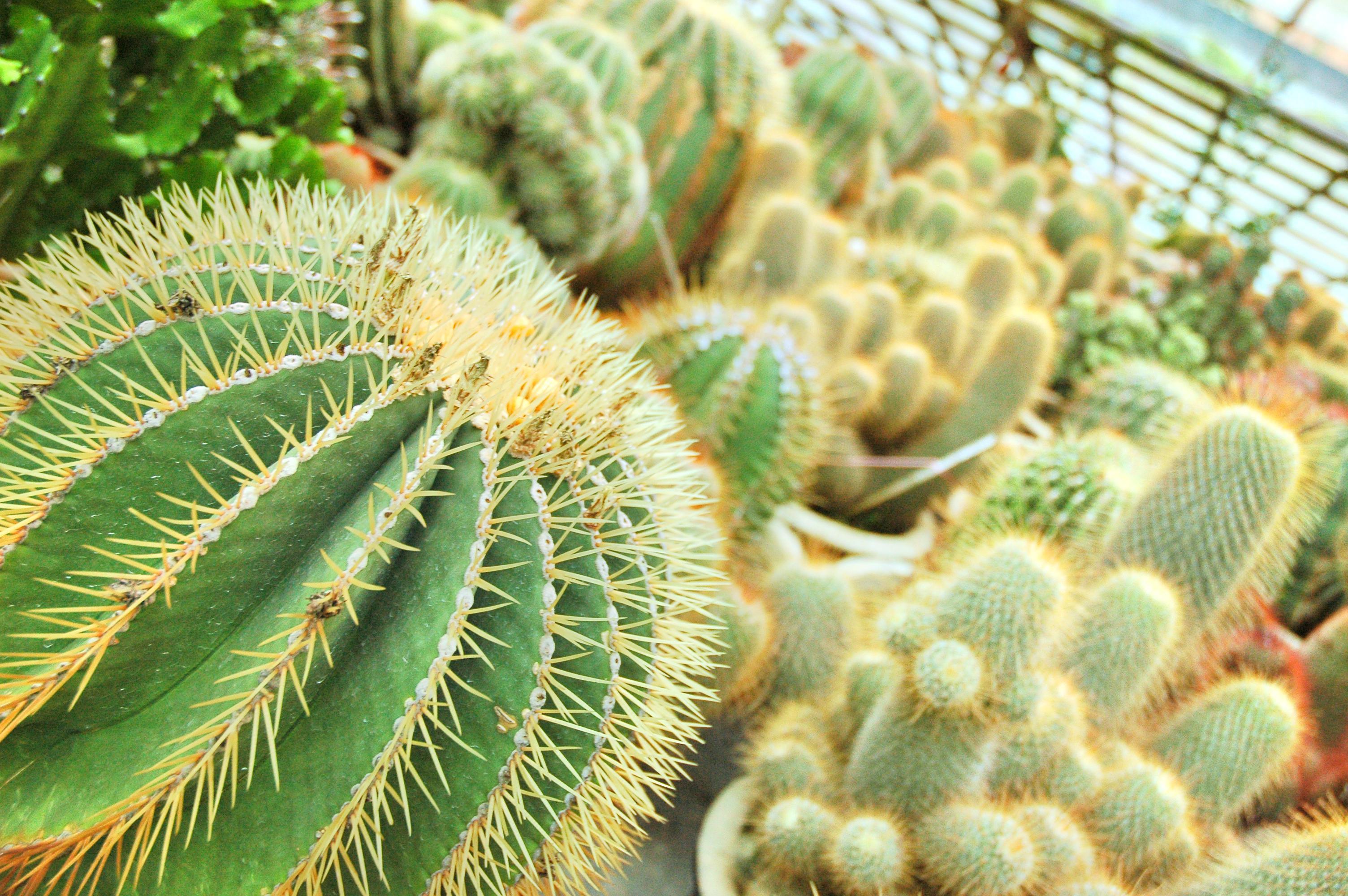 Cactus Valley