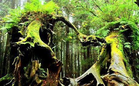 아리산 국가 삼림 공원