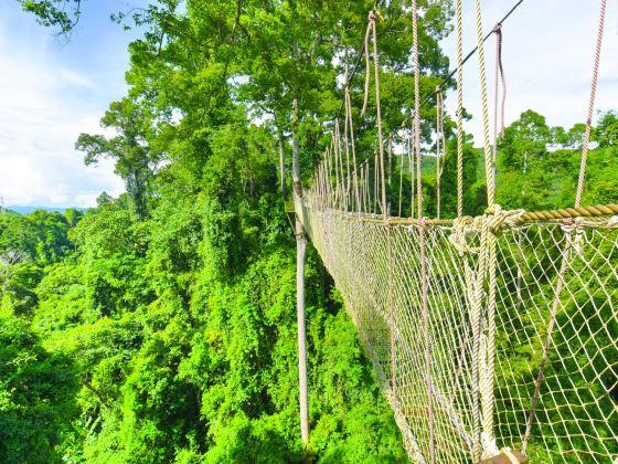 시솽반나 열대우림 국립공원 망톈수 자연경관지구