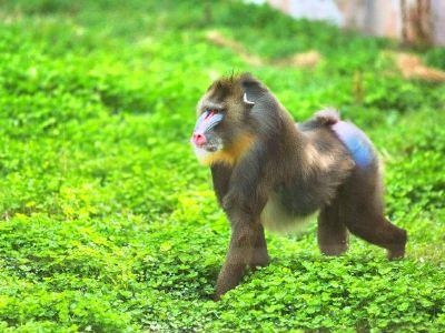 Hengshuiyesheng Zoo