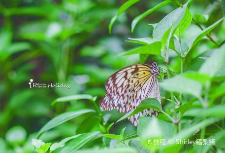 Palawan Butterfly Garden