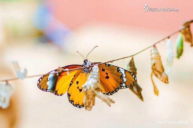 Palawan Butterfly Garden4