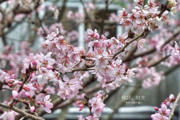 Xitou Nature Eduction Area1