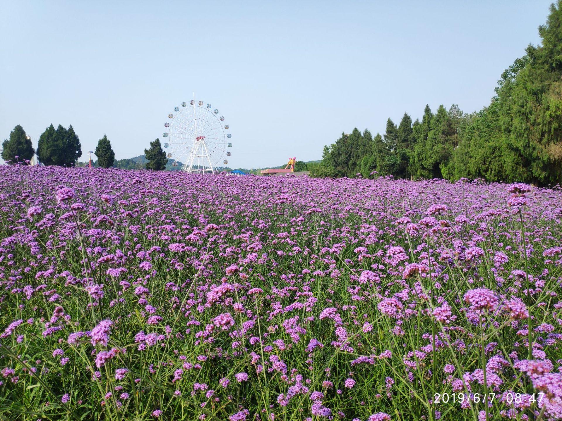 Yuanxiang International Herb Garden