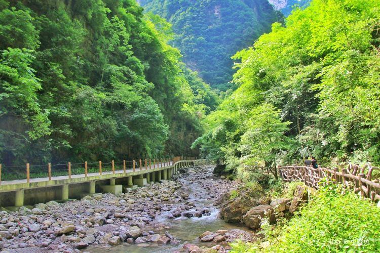 三峽竹海1