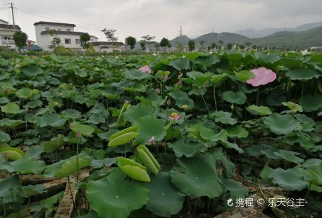Tantang Lotus Scenic Area