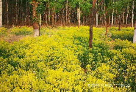Luanzhoushi Forest Park