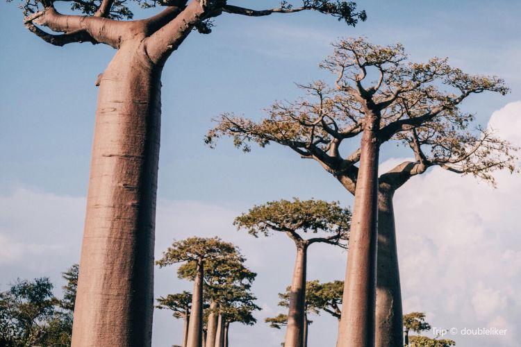 Andasibe-Mantadia National Park4