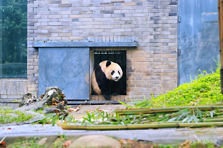 China's Giant Panda Conservation Research Center, Dujiangyan Base2