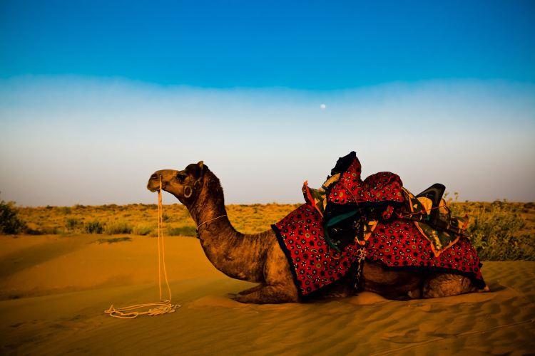 塔爾沙漠3