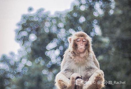 猴王穀景區